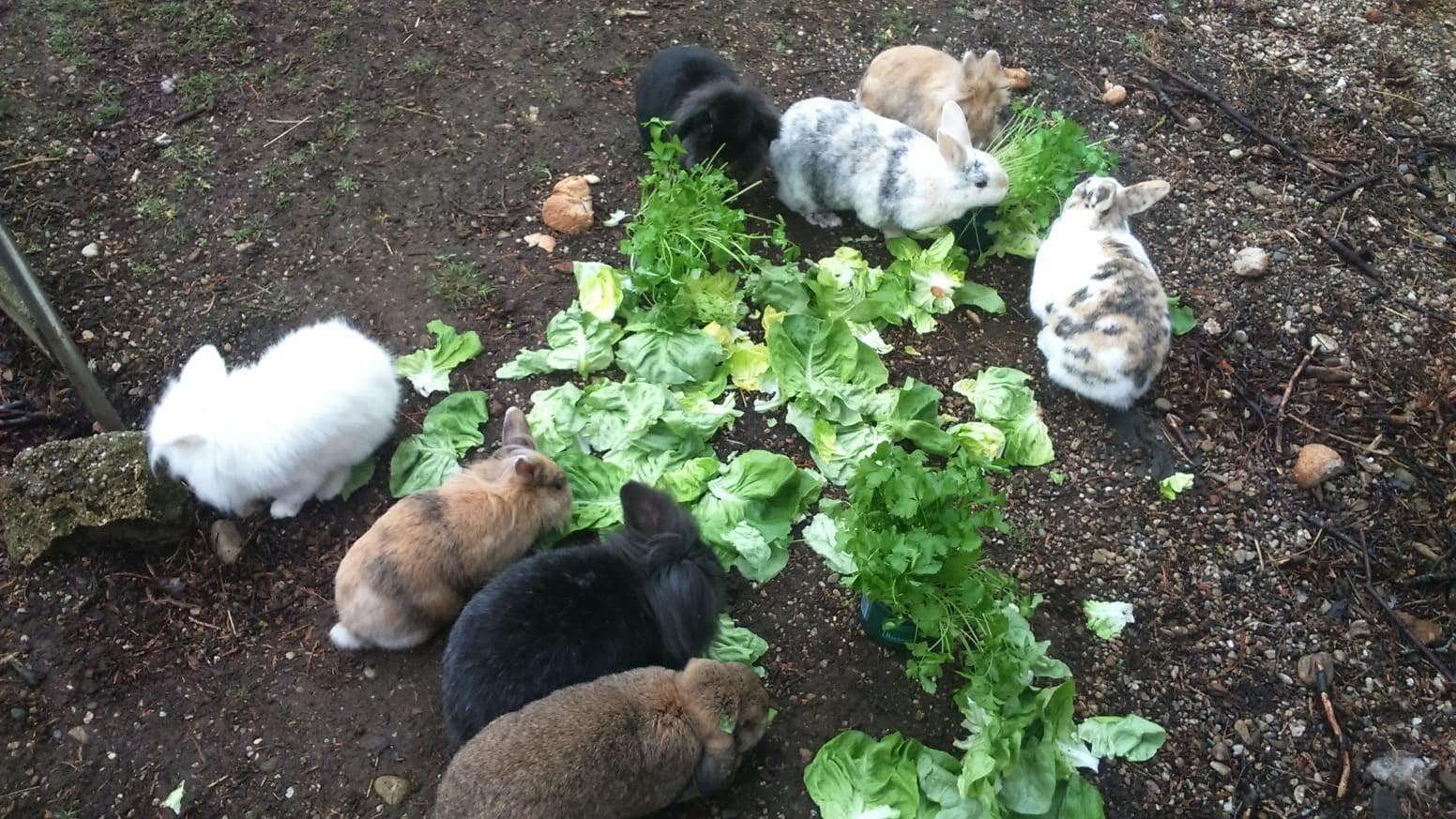 Kaninchen Futteraufnahme