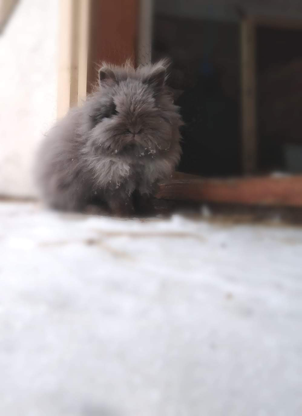 Kaninchen, Schnee