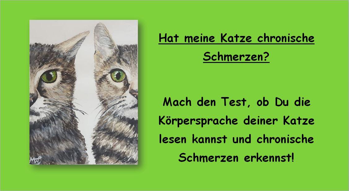 Kreuzbandriss, Interferenzstrom Therapie, Tierarzt Pattenham, Chiemsee, Truchtlaching, Katze, Schmerzen, chronisch