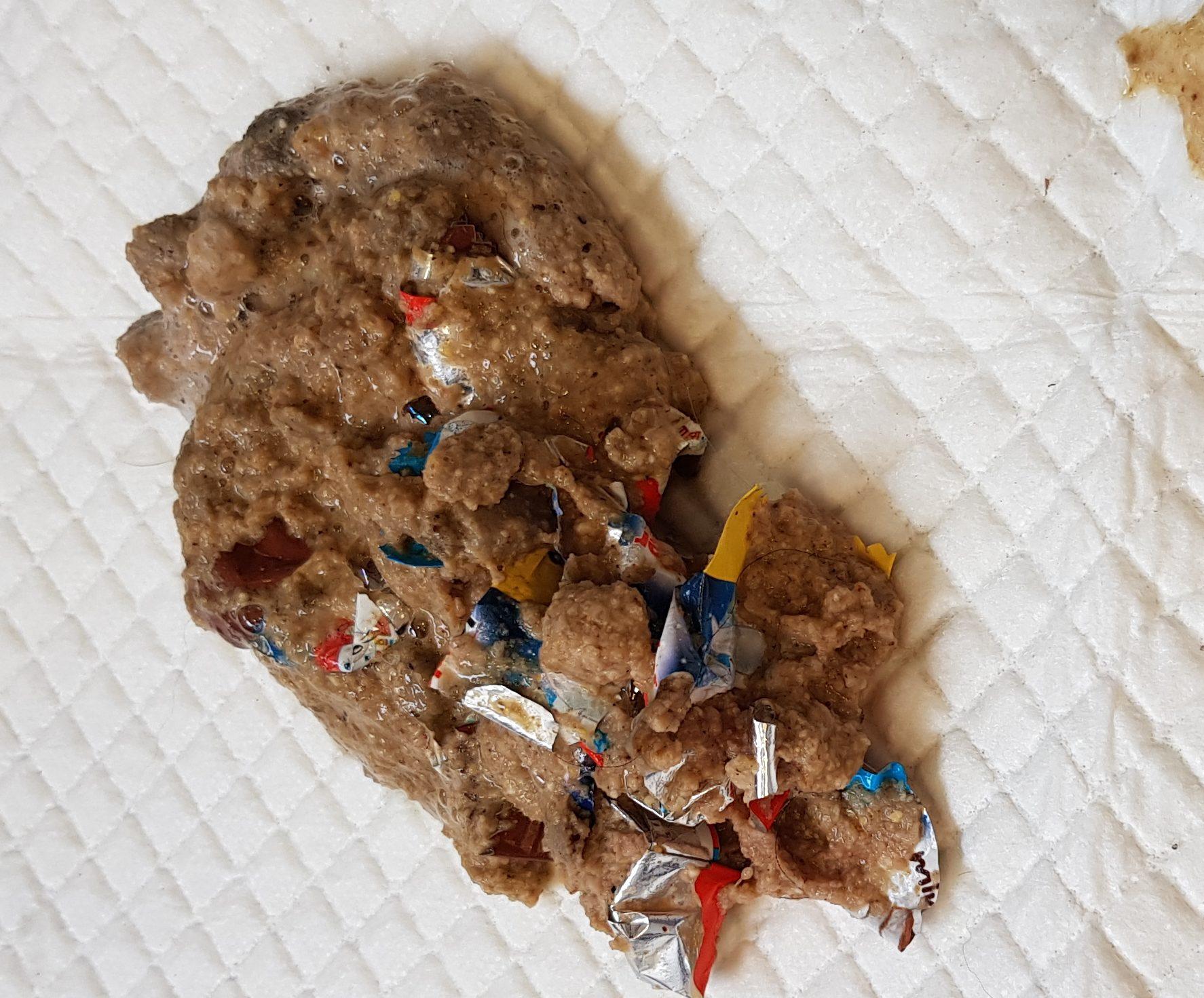 Ostern, Schokoladenintoxikation, Tierarzt Pattenham, Chiemsee, Truchtlaching, Bayern, Landkreis Traunstein, Osternest, Hund, Vergiftung