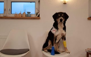 Notdienst, Neuregelung GOT, Gebührenordnung für Tierärzte, Bundesgesetzblatt
