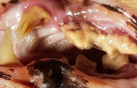 FORL, Zahngesundheit, Dentalröntgen, Zahnerkrankungen