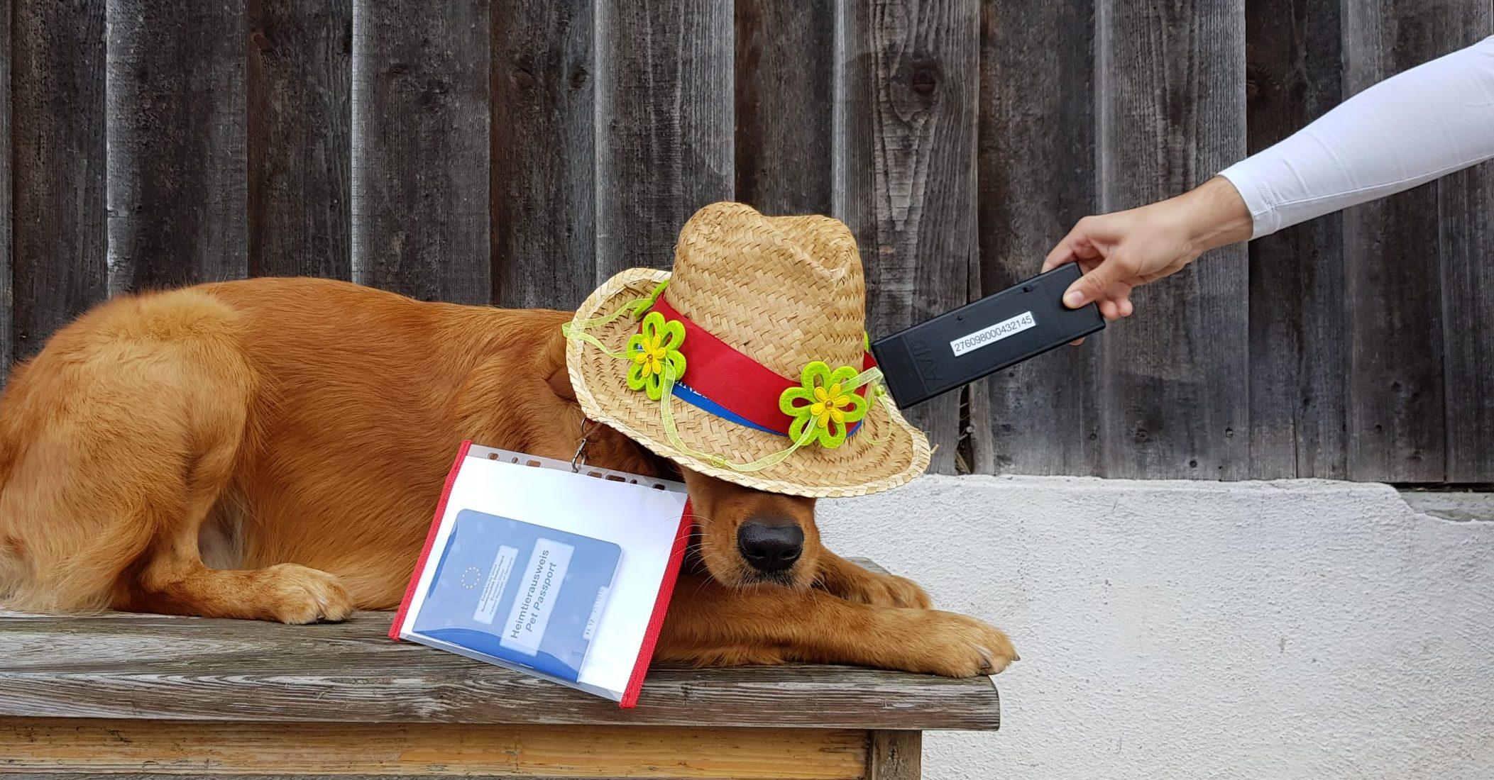 Urlaubszeit ist Reisezeit Folge 2: Einreisebestimmungen; der Heimtierausweis