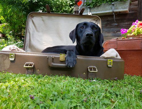 Ich packe meinen Koffer und nehme mit:  Folge 4 unseres Reiseblogs: die Reiseapotheke