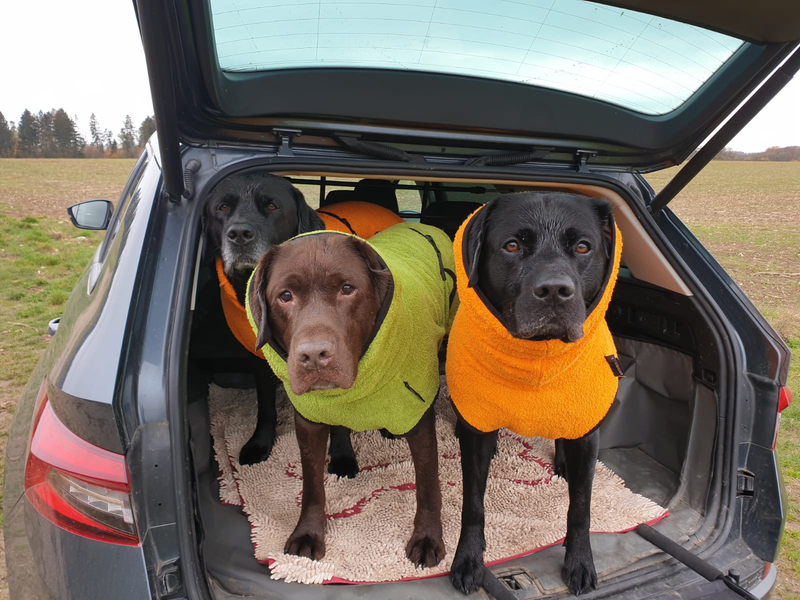Cool down, Training, Hund