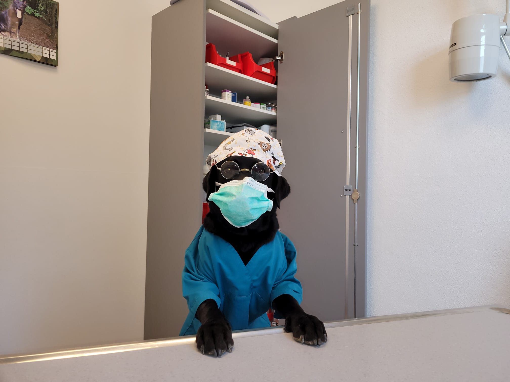 Lehrstelle Tiermedizinische Fachangestellte (w/m/d)