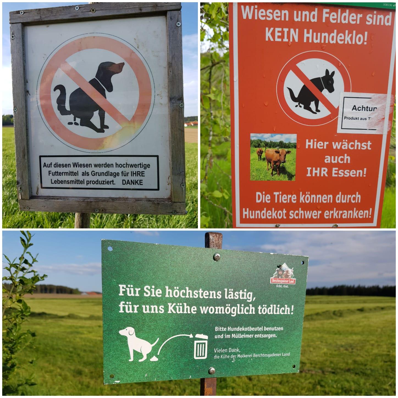 Hundekot auf Grünlandflächen