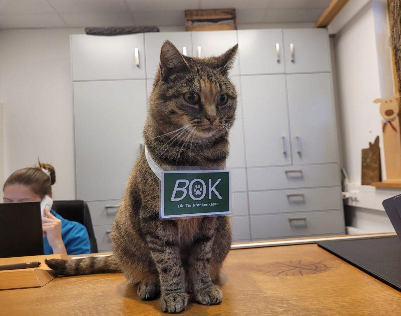 Tierkrankenversicherung-all inclusive, oder vielleicht doch nicht? Was ist der Unterschied zwischen Kranken – und einer reinen OP-Versicherung. Lohnt sich der Abschluss der ein oder anderen Versicherung für mich und mein Tier?